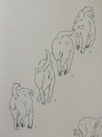 Tagant risti astuv traavisamm (raamatust Dogsteps, autor Rachel Page Elliott, 1975)