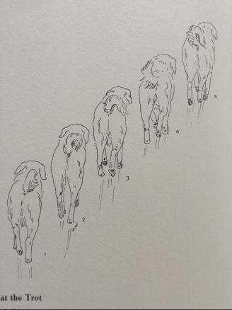 Normaalne traavisamm (raamatust Dogsteps, autor Rachel Page Elliott, 1975)
